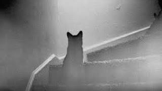"""getlinkyoutube.com-Ce monde si étrange """" D'étranges animaux fantômes """""""