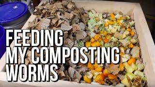 getlinkyoutube.com-How I Feed My Composting Worm Bins