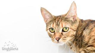 LIVE: Feral Mama Cats Raising Their Kittens   Nelia & Serenity   TinyKittens.com
