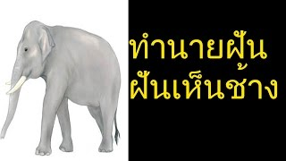 ฝันเห็นช้าง หรือฝันเห็น ช้างตัวใหญ่ (พร้อมเลขเด็ด)