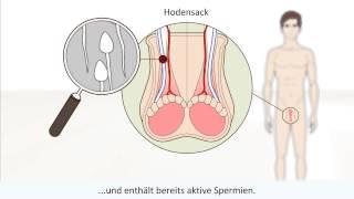 getlinkyoutube.com-Der Männliche Orgasmus erklärt