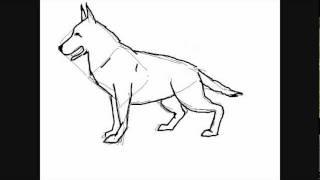 getlinkyoutube.com-Hunde zeichnungen : Deutscher Schäferhund - Online Zeichnen Lernen