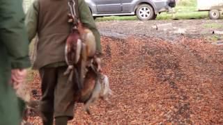 Pheasant Shooting at Ingleborough Shoot Clapham North Yorkshire
