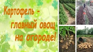 Картофель - главный овощ на огороде! (семинар, основные правила)