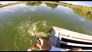 getlinkyoutube.com-Carp fishing (Grass Carp) GoPro Hero3+ 720p HD