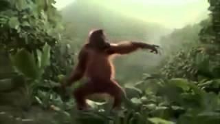 getlinkyoutube.com-Mono bailando ras tas tas