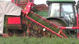 getlinkyoutube.com-P3K 1-row 3-point linked carrot harvester with elevator
