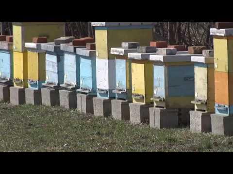 Mladenovac: Mesec zaštite pčela