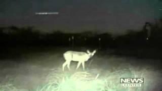 getlinkyoutube.com-UFO over Texas. Game camera captures Lights