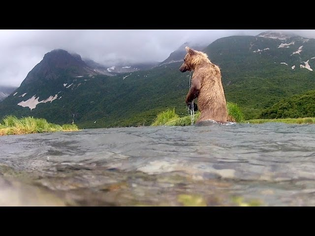 Grizzly Eats My GoPro