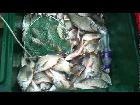 長洲出艇 2012.11.12 爆釣過擔黃腳立一百六十條