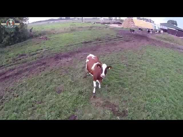 FUN Interoo7 Cow Droner