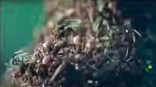 getlinkyoutube.com-Ant Army Invasion! - Wild South America - BBC