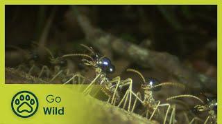 getlinkyoutube.com-Termites - The Inner Sanctum - The Secrets of Nature