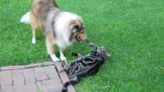 getlinkyoutube.com-Cat and dog are best friends