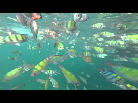 Snorkeling in Shark point - Koh Phi Phi - Thailand