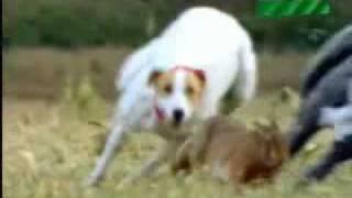 getlinkyoutube.com-Dog Vs Rabbit Funny