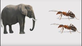 getlinkyoutube.com-Christian jokes Telugu 5  ( Mini Messages ) - Ants fight with Elephant