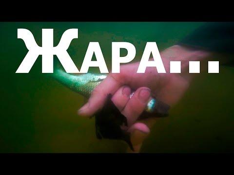 Ловля рыбы в жару