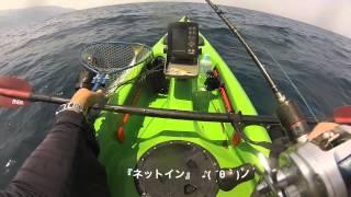 getlinkyoutube.com-kayak fishing【キターw】 ワラサ  新規開拓  青物 祭り?  カヤックフィッシング