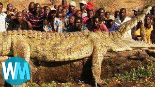 getlinkyoutube.com-Top 10 Most Insanely COLOSSAL Animals of All Time