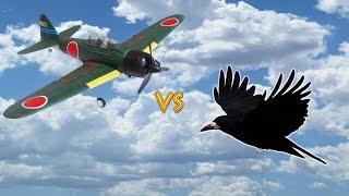 getlinkyoutube.com-Вороны против Самолёта на радиоуправлении-Ravens against the aircraft radio control