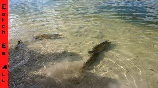 BEST FISHING SPOT IN FLORIDA for Peacock Bass ft. Tallfishermanj