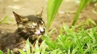 getlinkyoutube.com-Gata não abandona o dono nem depois da morte dele
