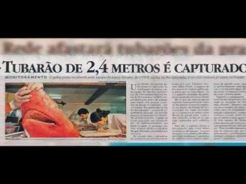 Ataque de Tubarão - A PROXIMA MORDIDA (Ataque de Tubarão em Recife - PE) - Shark Attacks