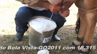 getlinkyoutube.com-recordista em leite endivia.f4v