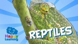 getlinkyoutube.com-Reptiles | Educational Video for Kids