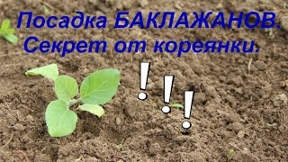 getlinkyoutube.com-Посадка баклажанов. Секрет урожая от кореянки. Часть I.