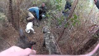 getlinkyoutube.com-Mississippi Hog Hunting (Yankeecam)