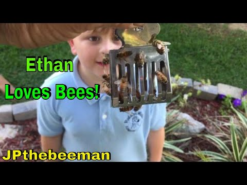 Ethan Is Crazy About Honey Bees! (Live Honey Bee Removal)