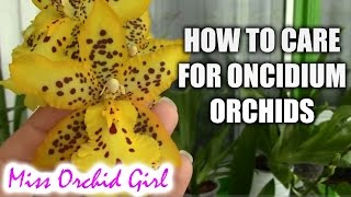 getlinkyoutube.com-How to care for Oncidium Orchids and Intergenerics - watering, fertilizing, reblooming
