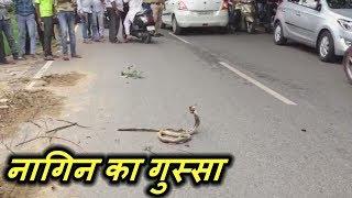 सड़क पर मर चुके नाग के पास बैठी नागिन का गुस्सा - Must Watch