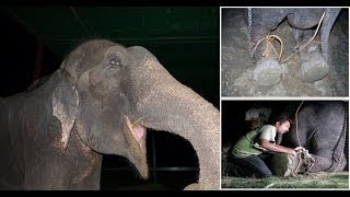 getlinkyoutube.com-50 years a Slave : Raju the Elephant cried tears of joy after being freed from suffering