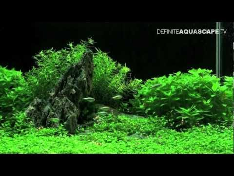 Planted aquarium 60x30x36 by roslinyakwariowe.pl