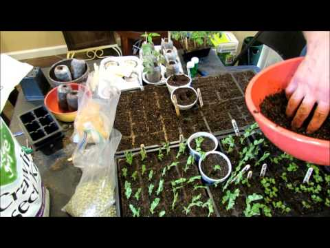 A Complete Guide to Seed Starting Peas: Container & Ground Planting, Fertilizing,  Frost & Rabbits