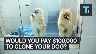 The Science Behind Dog Cloning