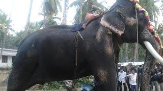 getlinkyoutube.com-Mangalamkunnu Karnan 2014 at Kuzhur Ekadashi