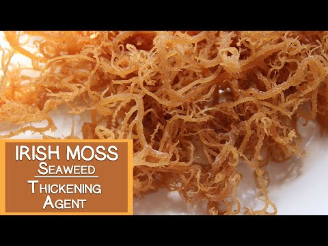 Irish Moss Seaweed, A Nutritious Thickening Agent