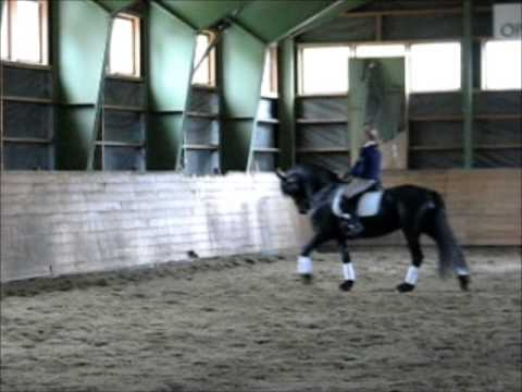 Roza P Friesian 1 pr mare for sale.
