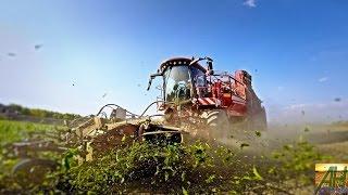 getlinkyoutube.com-Holmer T4-30 TerraDos harvesting -GoPro- [FULL HD]