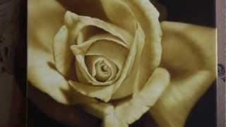 getlinkyoutube.com-Airbrush Painting of a Rose