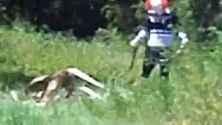 getlinkyoutube.com-Clown in Woods Caught on Tape