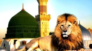 هل تعلم لماذا ستدخل الاسود المسجد النبوي في اخر الزمان