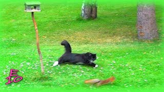 getlinkyoutube.com-Cat chasing a squirrel