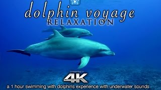 getlinkyoutube.com-4K DOLPHIN VOYAGE Relaxation + Music | 1 HR Healing Nature Video w/ Binaural Sounds for Meditation