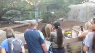 getlinkyoutube.com-Roaring lion pees on kid!!